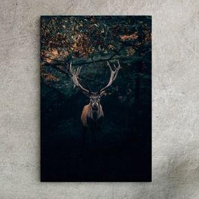 animal in florest